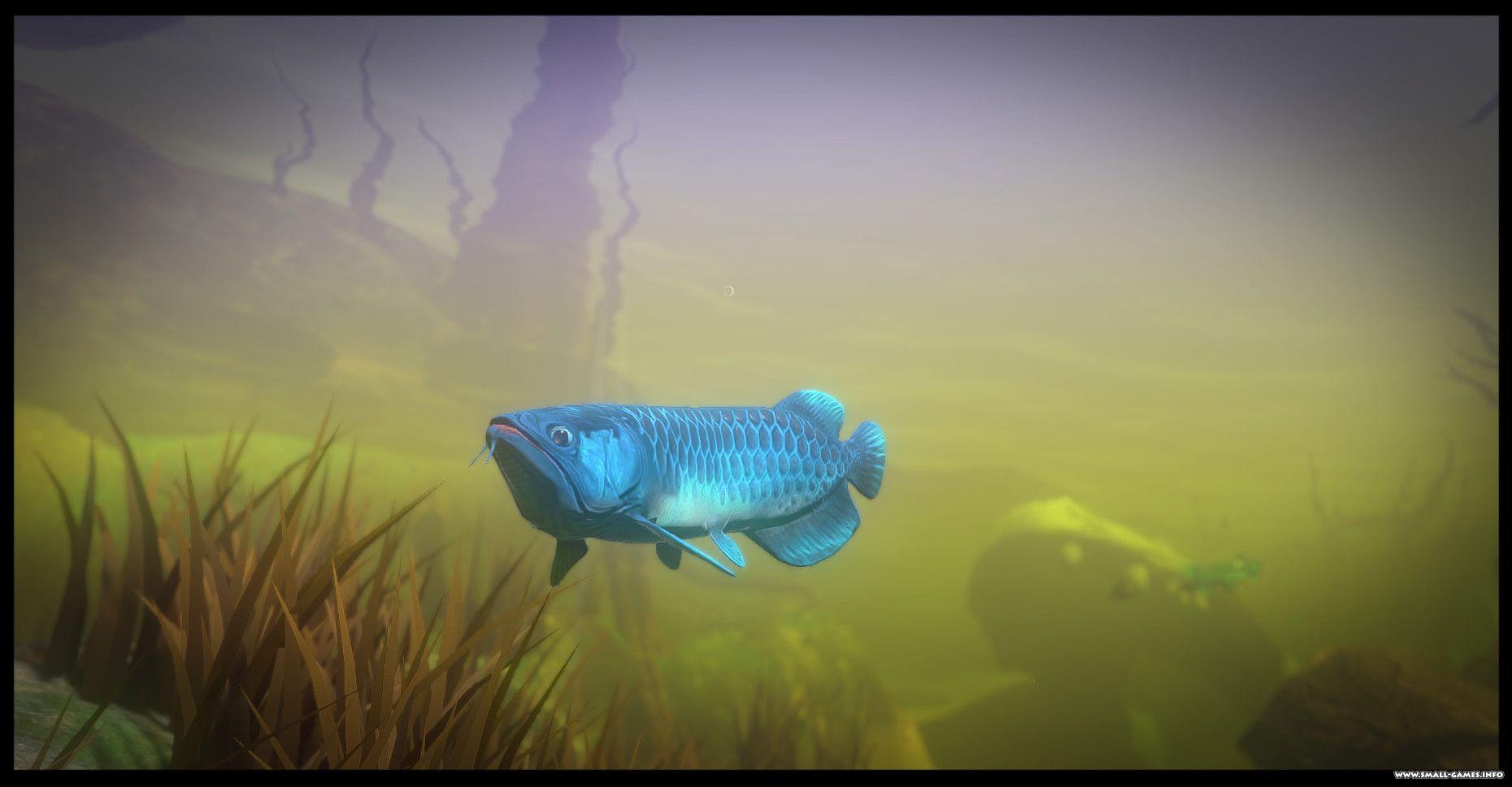 Feed and grow fish v0. 8. 5 free download! Скачать бесплатно! Crub.